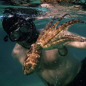 Documental: My Octopus Teacher